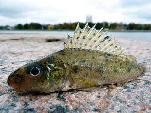 http://fishing-kst.3dn.ru/_ph/1/2/381591168.jpg?1435845492
